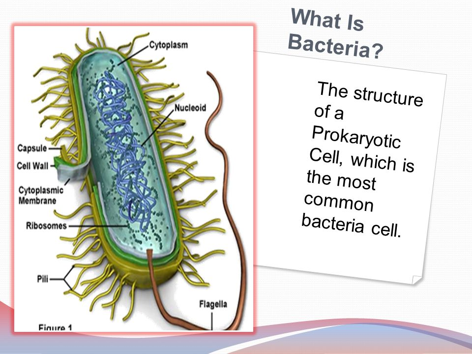 Work Cited LaRosa, Liz. Where can we find bacteria? .