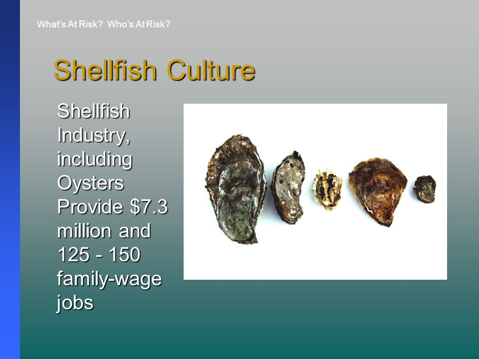 Shellfish Culture Shellfish Industry, including Oysters Provide $7.3 million and 125 - 150 family-wage jobs What's At Risk.