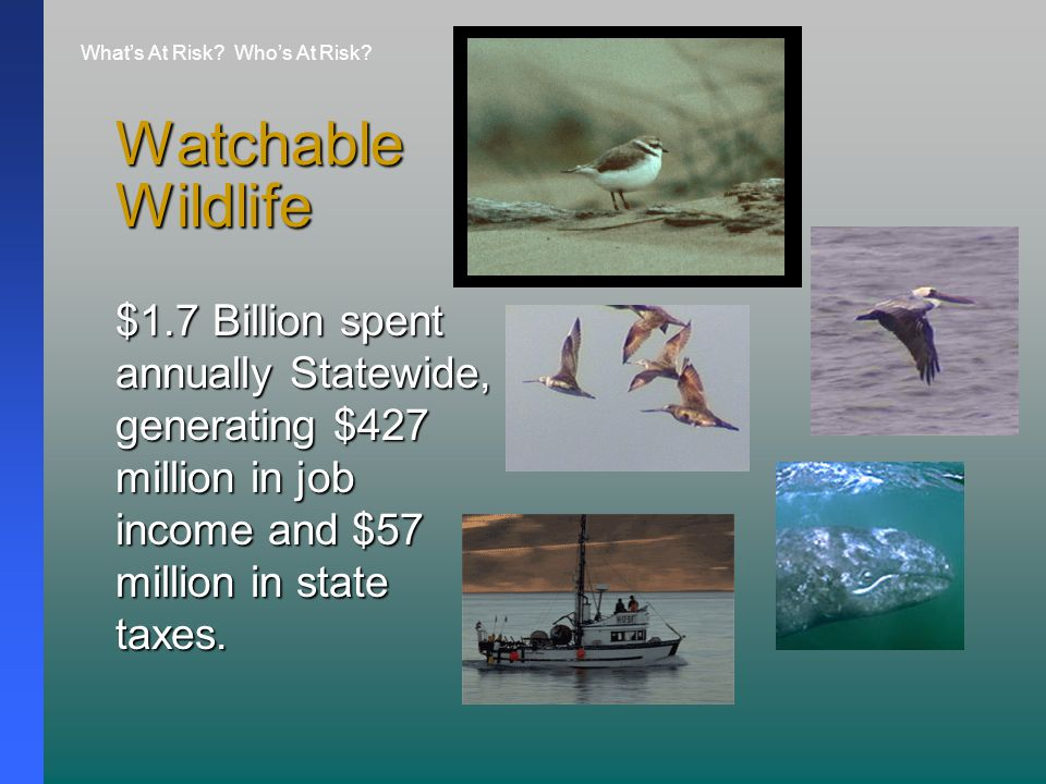 Watchable Wildlife $1.7 Billion spent annually Statewide, generating $427 million in job income and $57 million in state taxes.