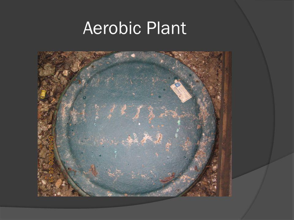 Aerobic Plant