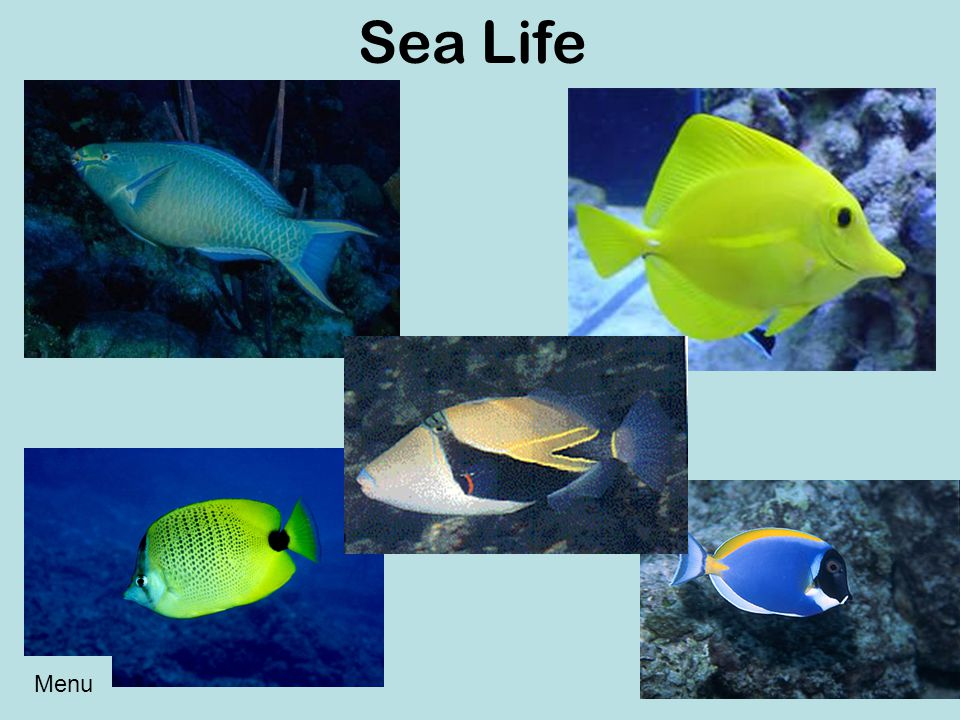 Sea Life Menu