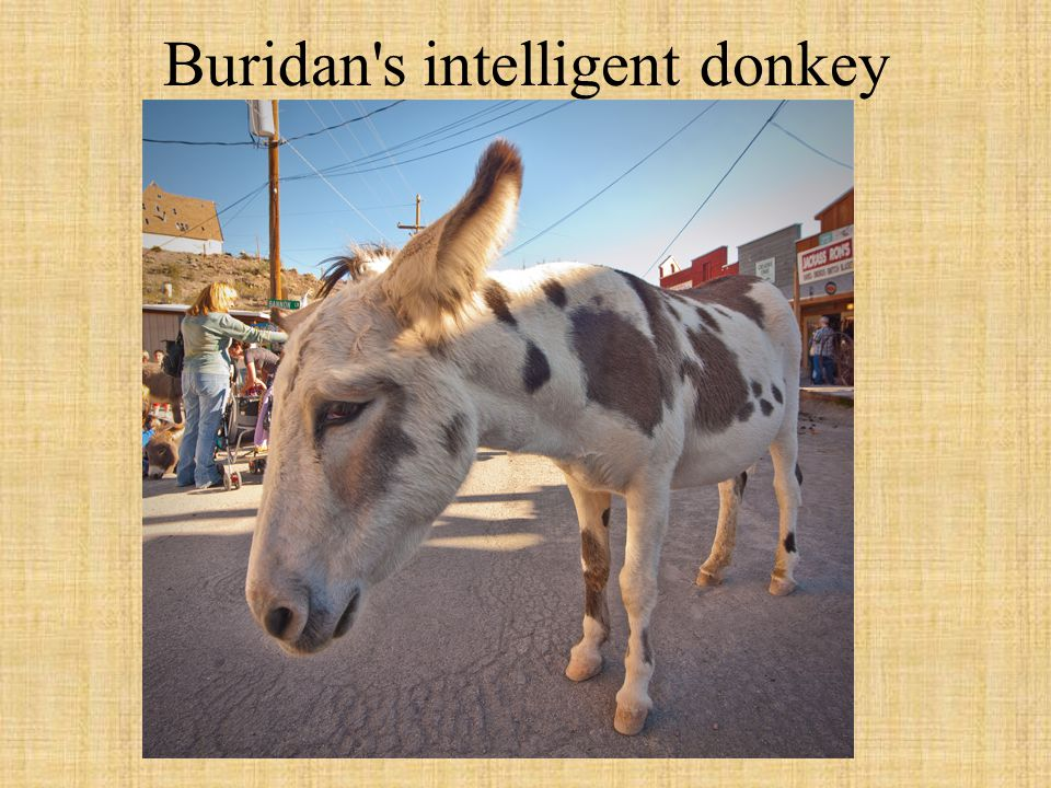 Buridan s intelligent donkey