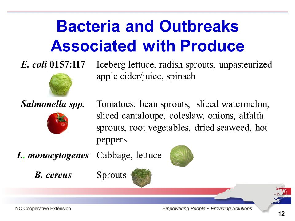 12 E. coli 0157:H7Iceberg lettuce, radish sprouts, unpasteurized apple cider/juice, spinach Salmonella spp.Tomatoes, bean sprouts, sliced watermelon,