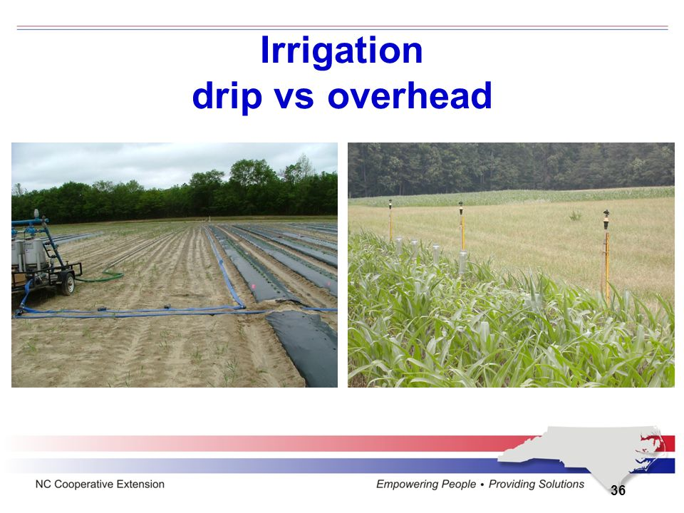 Irrigation drip vs overhead 36
