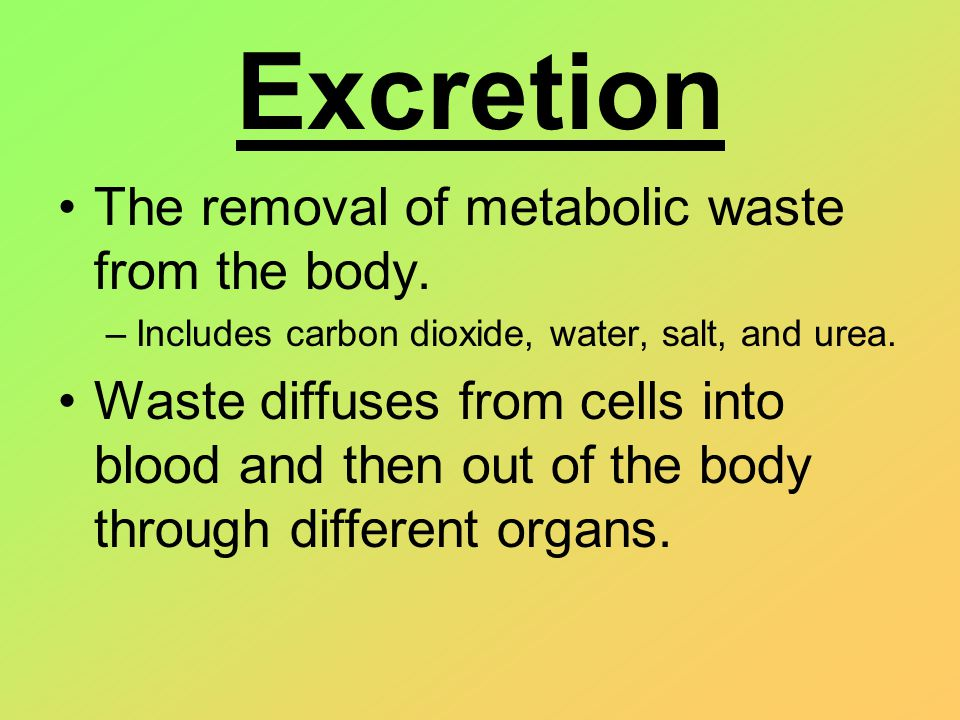 Excretion The removal of metabolic waste from the body. –Includes carbon dioxide, water, salt, and urea. Waste diffuses from cells into blood and then