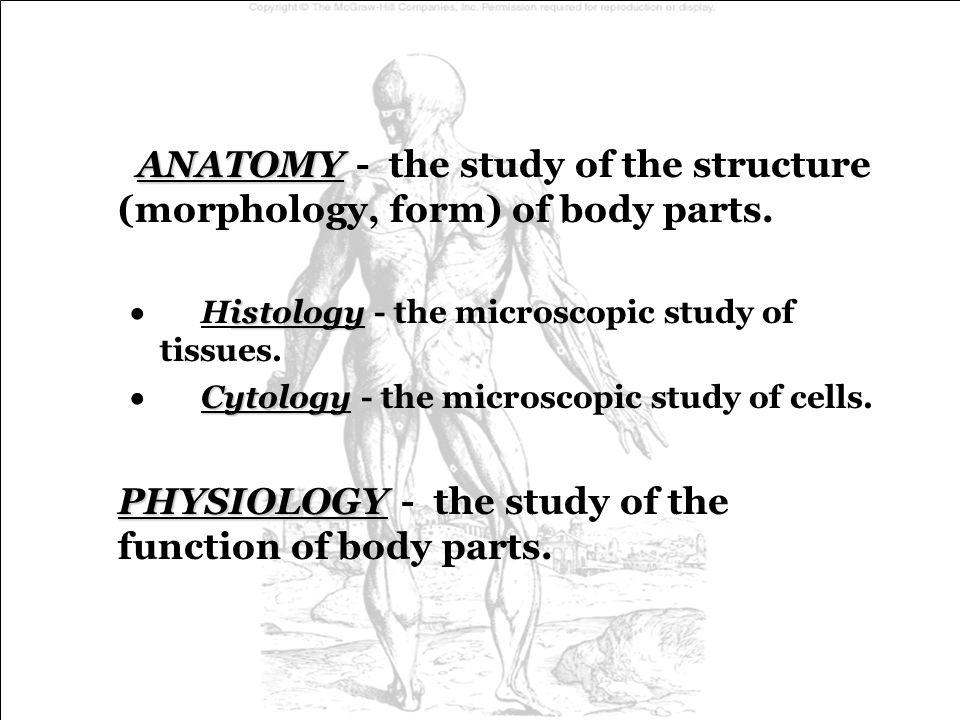 Macromolecules (i.e.