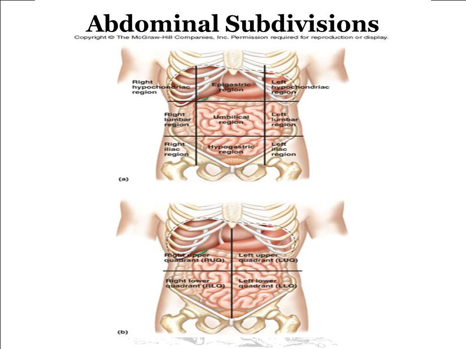Abdominal Subdivisions