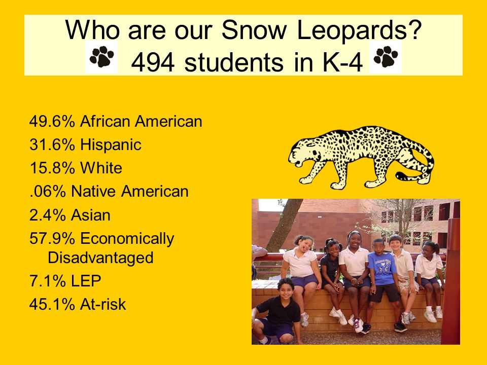 Who are our Snow Leopards.