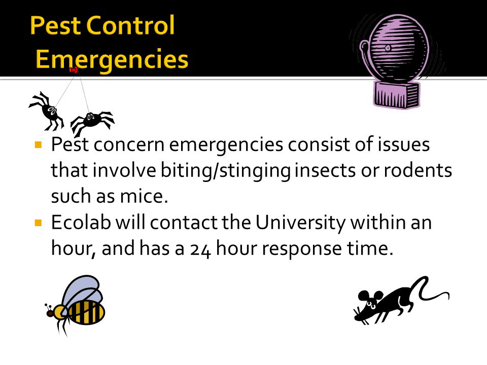  Pest concern emergencies consist of issues that involve biting/stinging insects or rodents such as mice.  Ecolab will contact the University within