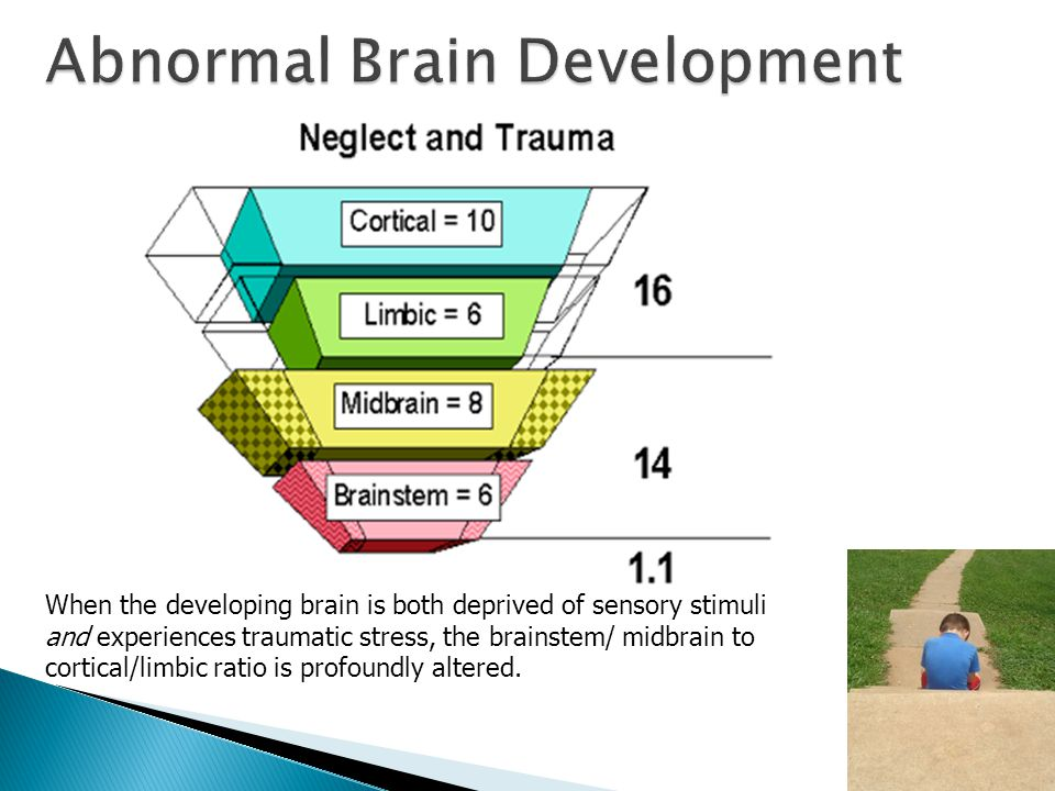 When the developing brain is both deprived of sensory stimuli and experiences traumatic stress, the brainstem/ midbrain to cortical/limbic ratio is profoundly altered.