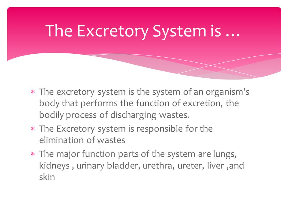 The excretory system is the system of an organism s body that performs the function of excretion, the bodily process of discharging wastes.