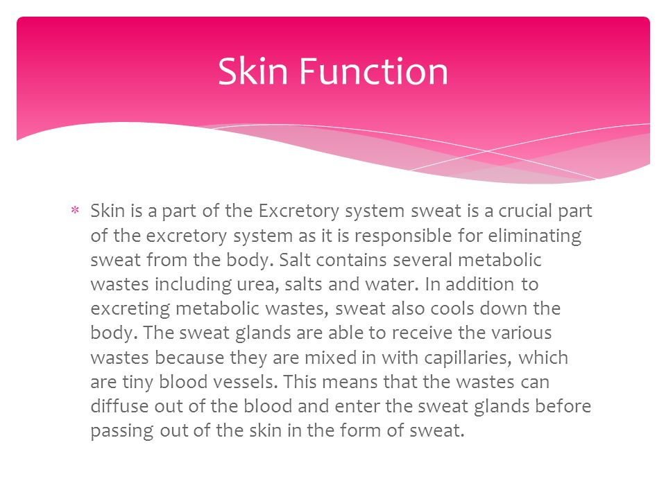  Skin is a part of the Excretory system sweat is a crucial part of the excretory system as it is responsible for eliminating sweat from the body.