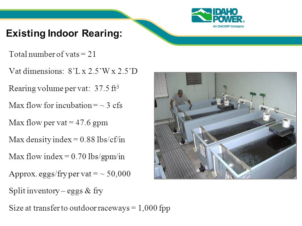 Existing Indoor Rearing: Total number of vats = 21 Vat dimensions: 8'L x 2.5'W x 2.5'D Rearing volume per vat: 37.5 ft 3 Max flow for incubation = ~ 3 cfs Max flow per vat = 47.6 gpm Max density index = 0.88 lbs/cf/in Max flow index = 0.70 lbs/gpm/in Approx.