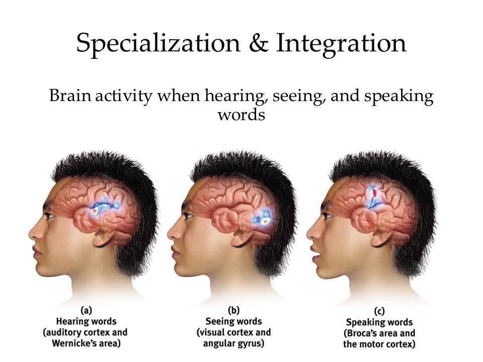 Specialization & Integration Brain activity when hearing, seeing, and speaking words