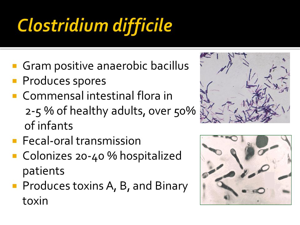  Gram positive anaerobic bacillus  Produces spores  Commensal intestinal flora in 2-5 % of healthy adults, over 50% of infants  Fecal-oral transmission  Colonizes 20-40 % hospitalized patients  Produces toxins A, B, and Binary toxin
