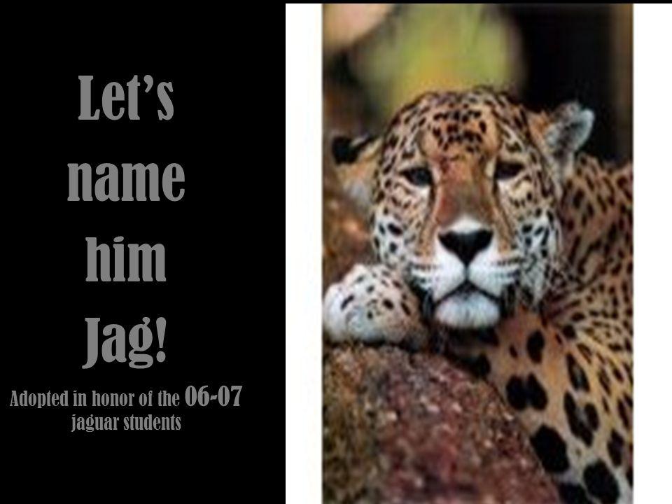 Jaguars Scientific Name is: PANTHERA ONCA Panthera leo: Lion Panthera tigris: TigerPanthera pardus:leopard