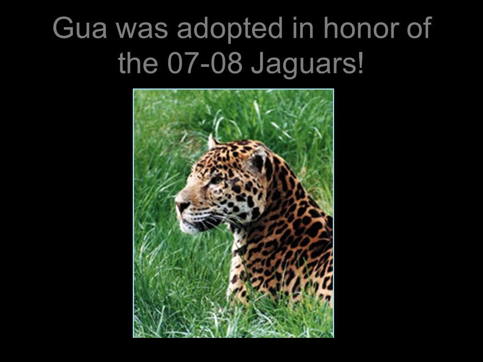 Let's name him Jag! Adopted in honor of the 06-07 jaguar students