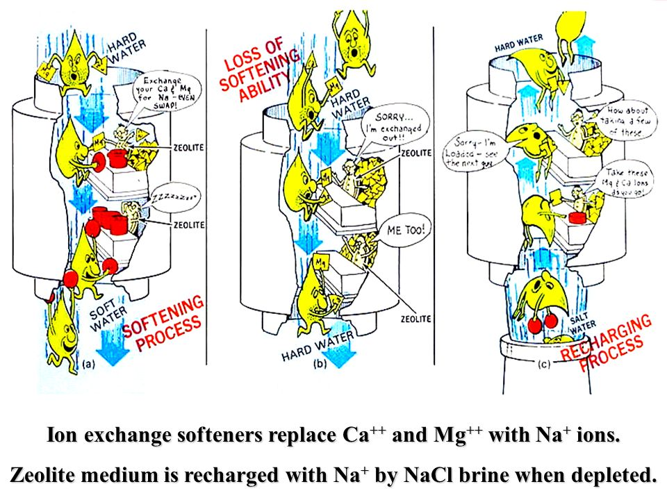Ion exchange softeners replace Ca ++ and Mg ++ with Na + ions.