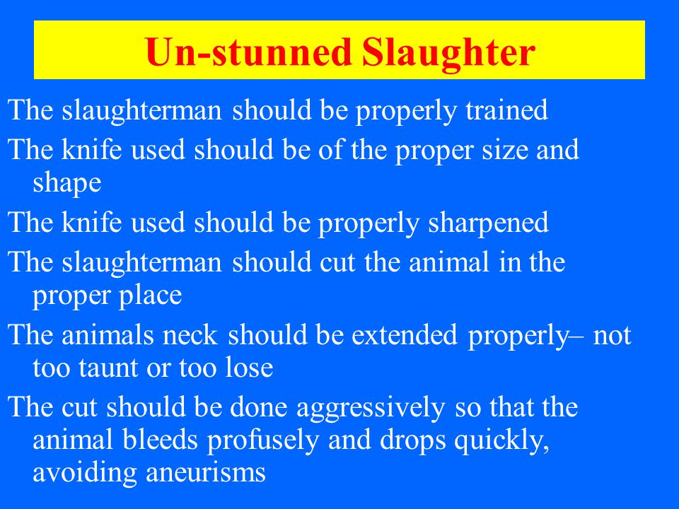 Un-stunned Slaughter The slaughterman should be properly trained The knife used should be of the proper size and shape The knife used should be properly sharpened The slaughterman should cut the animal in the proper place The animals neck should be extended properly– not too taunt or too lose The cut should be done aggressively so that the animal bleeds profusely and drops quickly, avoiding aneurisms