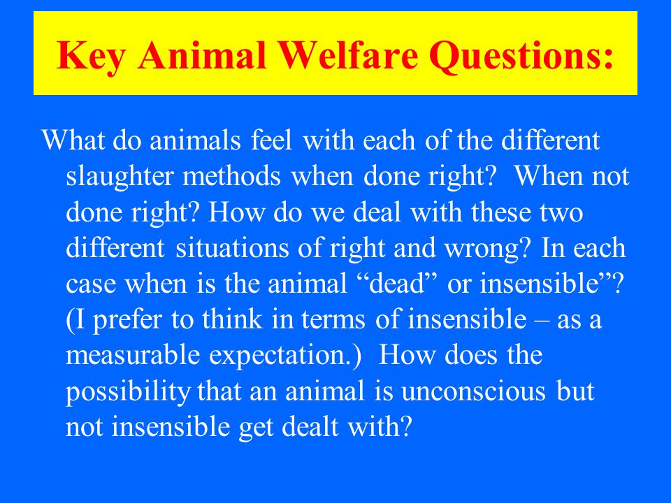 Key Animal Welfare Questions: What do animals feel with each of the different slaughter methods when done right.