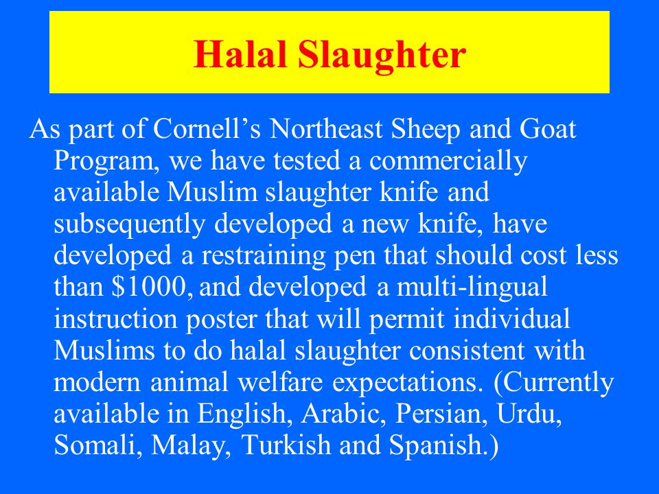 Halal Slaughter As part of Cornell's Northeast Sheep and Goat Program, we have tested a commercially available Muslim slaughter knife and subsequently developed a new knife, have developed a restraining pen that should cost less than $1000, and developed a multi-lingual instruction poster that will permit individual Muslims to do halal slaughter consistent with modern animal welfare expectations.