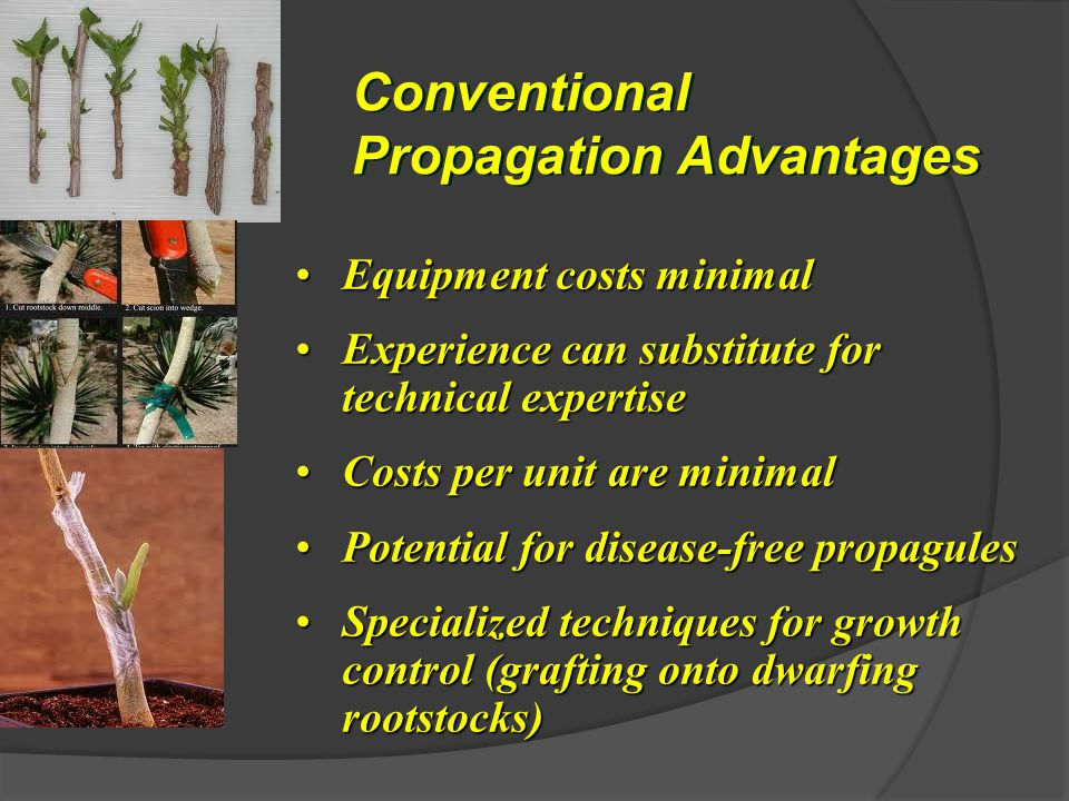 Conventional Propagation Advantages Equipment costs minimalEquipment costs minimal Experience can substitute for technical expertiseExperience can substitute for technical expertise Costs per unit are minimalCosts per unit are minimal Potential for disease-free propagulesPotential for disease-free propagules Specialized techniques for growth control (grafting onto dwarfing rootstocks)Specialized techniques for growth control (grafting onto dwarfing rootstocks)