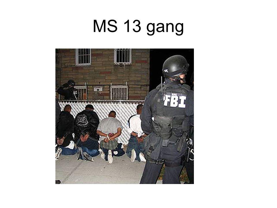 MS 13 gang