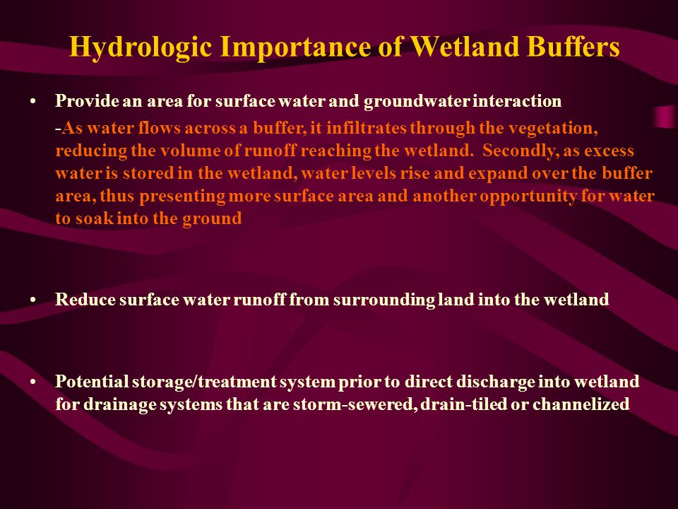 Hydrologic Importance of Wetland Buffers Provide an area for surface water and groundwater interaction -As water flows across a buffer, it infiltrates through the vegetation, reducing the volume of runoff reaching the wetland.
