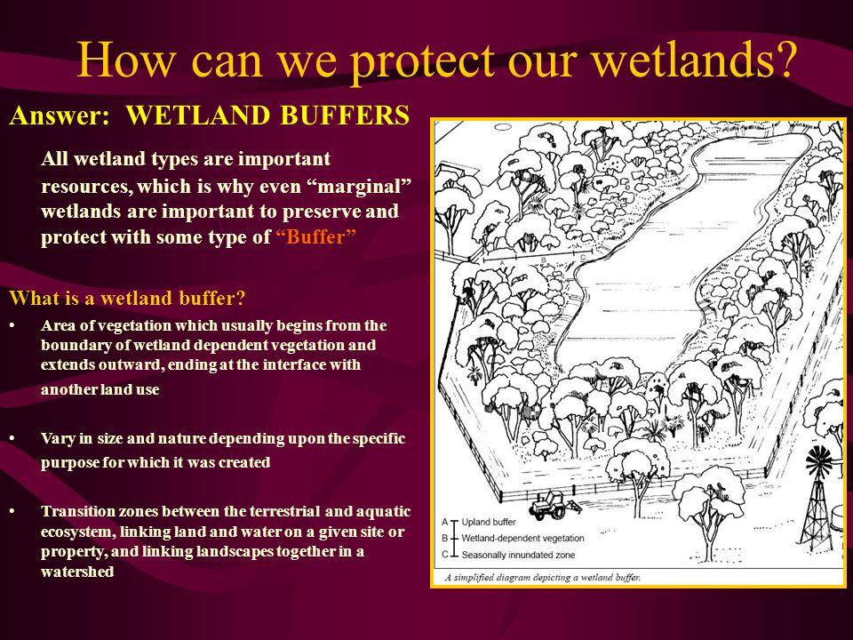 How can we protect our wetlands.
