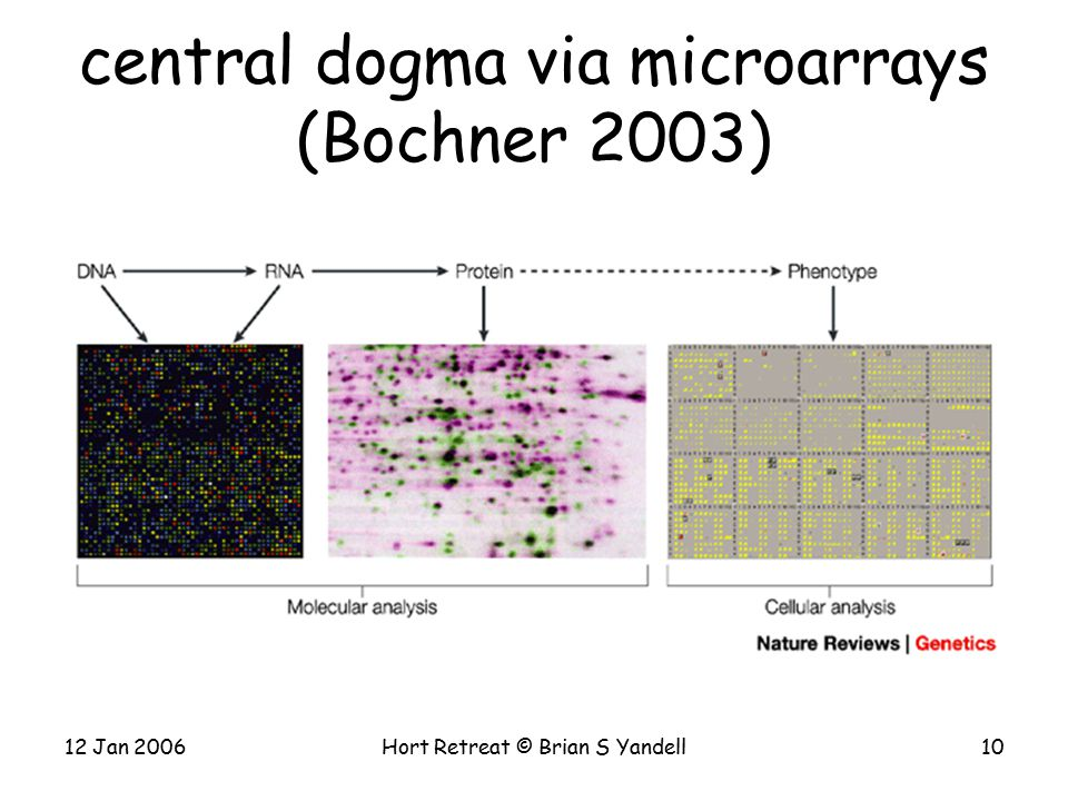 12 Jan 2006Hort Retreat © Brian S Yandell10 central dogma via microarrays (Bochner 2003)