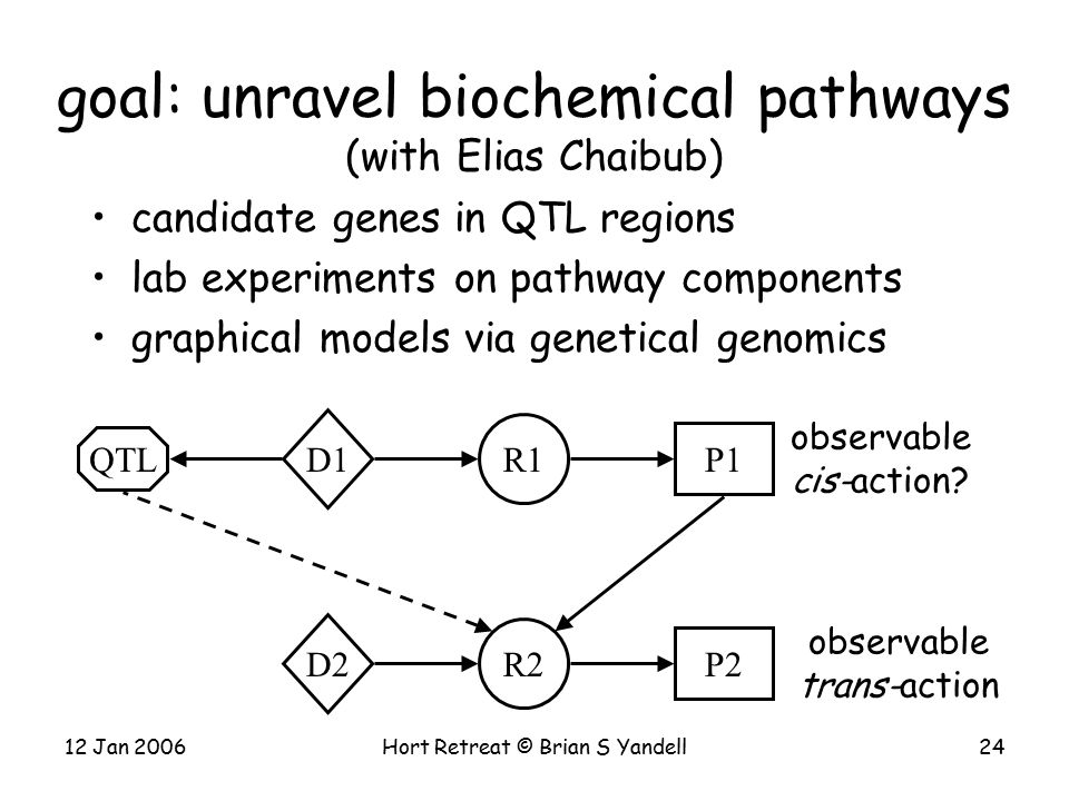 12 Jan 2006Hort Retreat © Brian S Yandell24 candidate genes in QTL regions lab experiments on pathway components graphical models via genetical genomics goal: unravel biochemical pathways (with Elias Chaibub) R2 D2 P2 QTL R1 D1 P1 observable trans-action observable cis-action