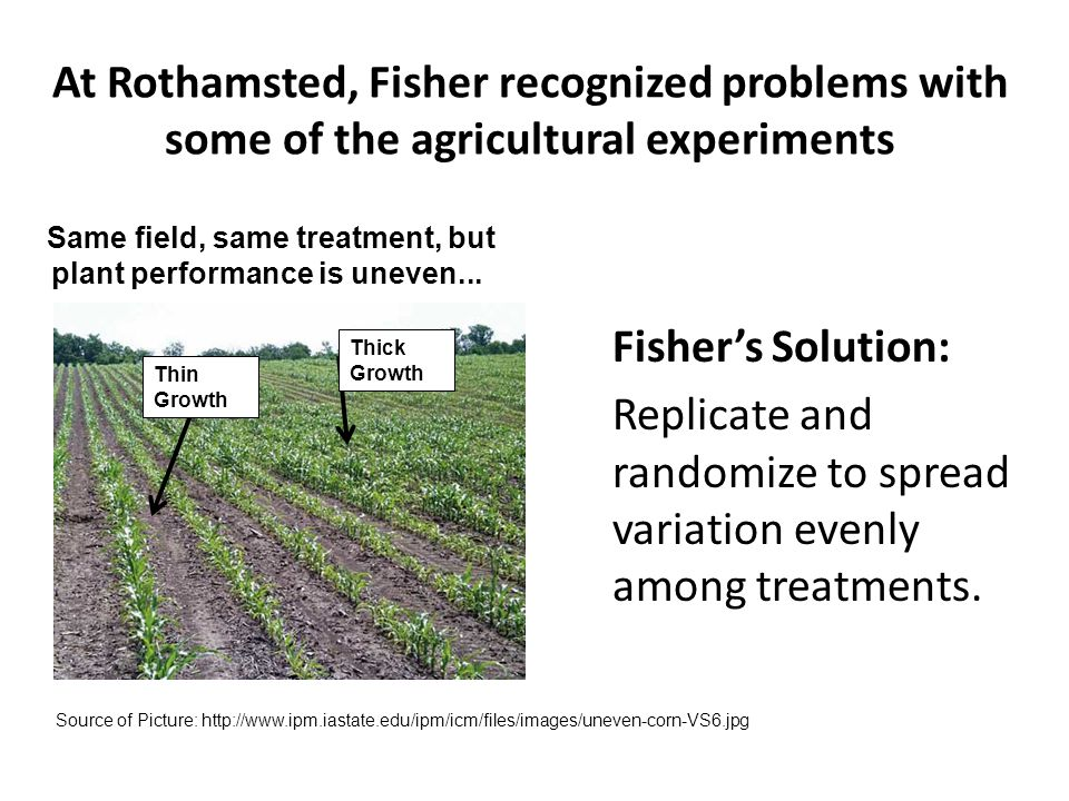 At Rothamsted, Fisher recognized problems with some of the agricultural experiments Fisher's Solution: Replicate and randomize to spread variation eve
