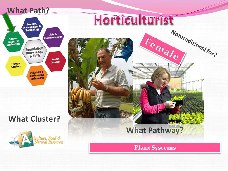 What Cluster? What Pathway? What Path? Nontraditional for? Plant Systems