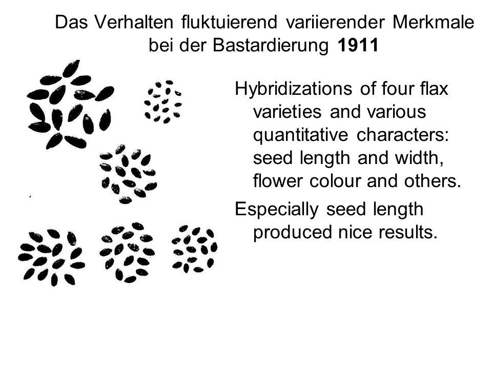 Das Verhalten fluktuierend variierender Merkmale bei der Bastardierung 1911 Hybridizations of four flax varieties and various quantitative characters: