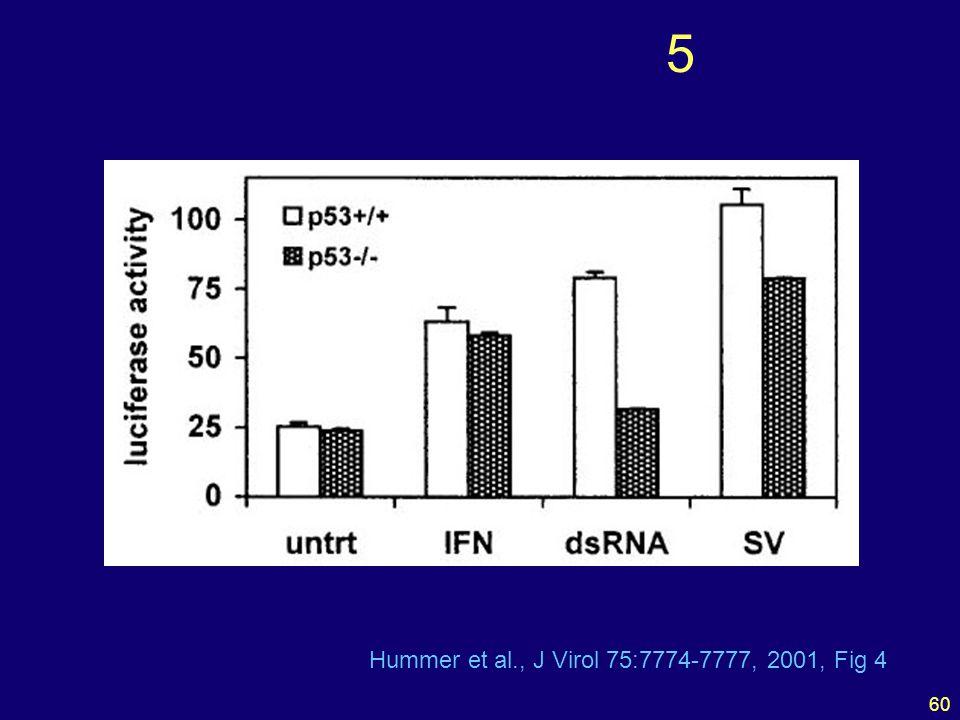 60 5 Hummer et al., J Virol 75:7774-7777, 2001, Fig 4