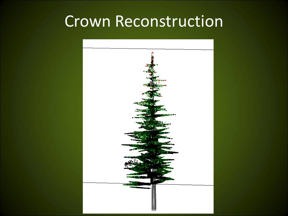 Crown Reconstruction