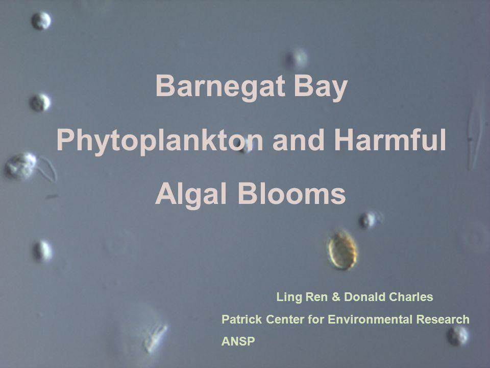 Barnegat Bay Phytoplankton and Harmful Algal Blooms Ling Ren & Donald Charles Patrick Center for Environmental Research ANSP