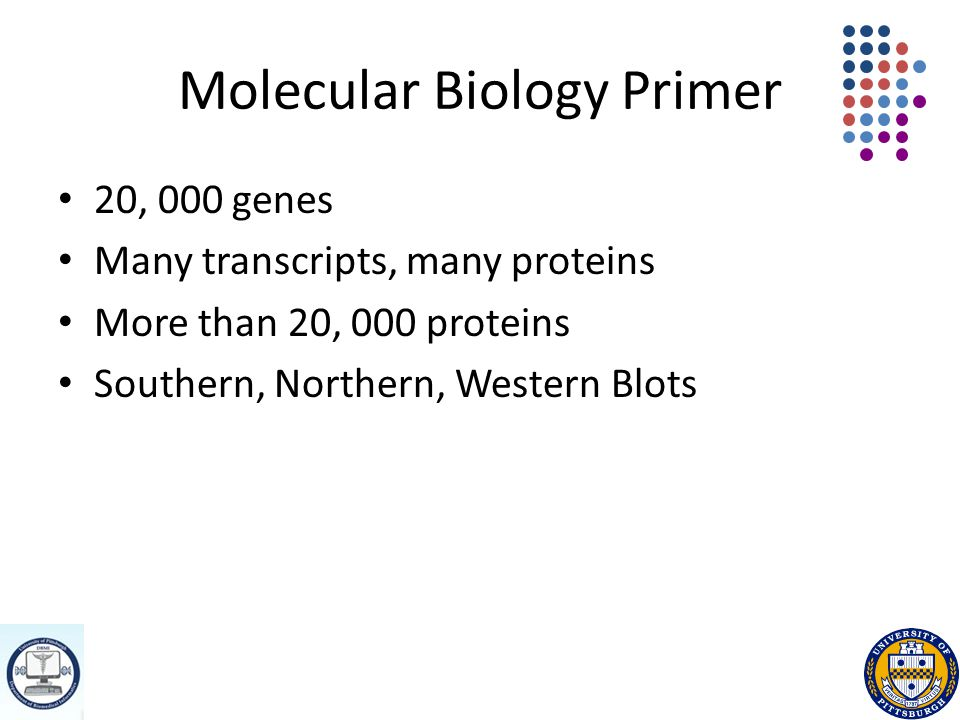 Molecular Biology Primer 20, 000 genes Many transcripts, many proteins More than 20, 000 proteins Southern, Northern, Western Blots
