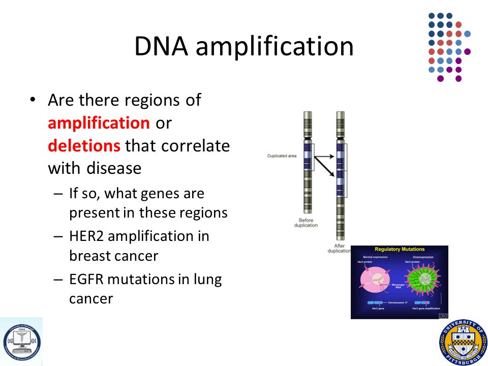 DNA amplification Are there regions of amplification or deletions that correlate with disease – If so, what genes are present in these regions – HER2 amplification in breast cancer – EGFR mutations in lung cancer