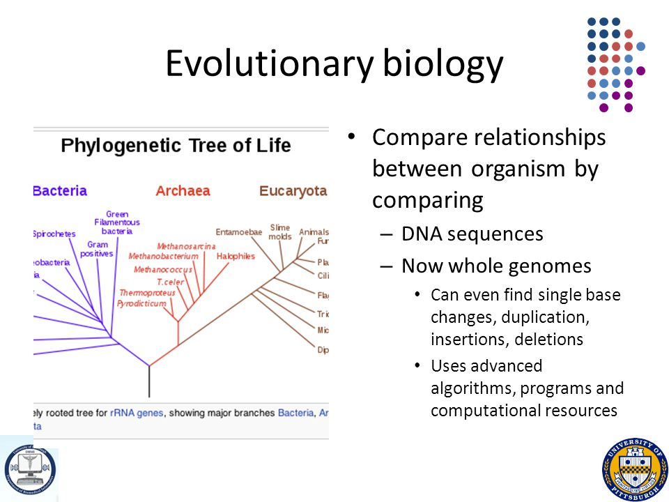 Evolutionary biology Compare relationships between organism by comparing – DNA sequences – Now whole genomes Can even find single base changes, duplication, insertions, deletions Uses advanced algorithms, programs and computational resources