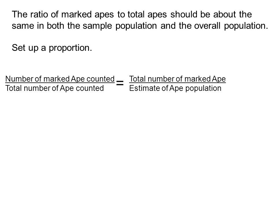 The ratio of marked apes to total apes should be about the same in both the sample population and the overall population.
