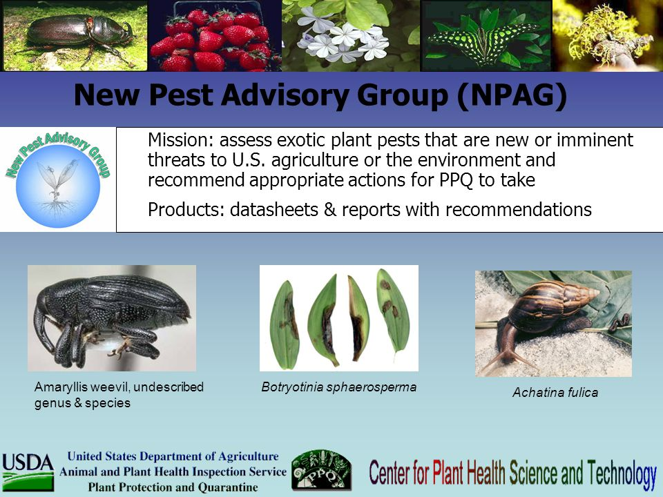 New Pest Advisory Group (NPAG) Mission: assess exotic plant pests that are new or imminent threats to U.S. agriculture or the environment and recommen