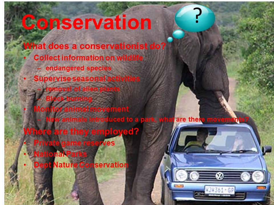 What does a conservationist do.