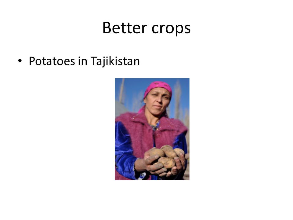 Better crops Potatoes in Tajikistan