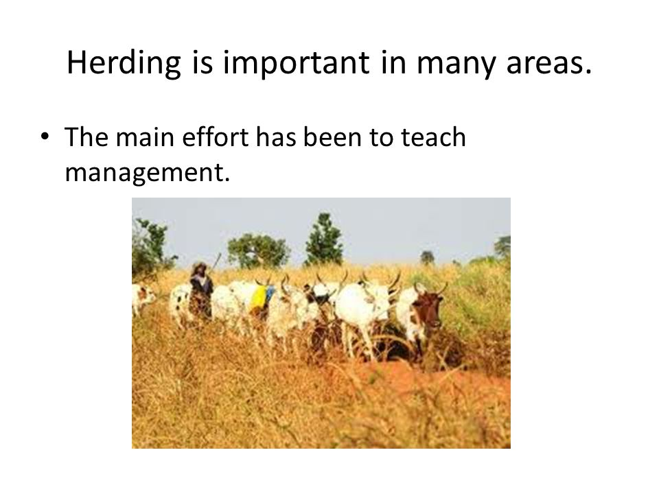 Herding is important in many areas. The main effort has been to teach management.
