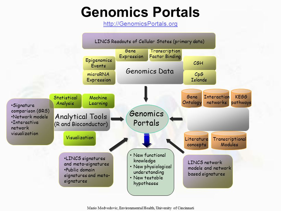 Literature concepts Genomics Portals Genomics Data Gene Ontology KEGG pathways Functional Knowledge Base Analytical Tools (R and Bioconductor) Epigenomics Events Transcription Factor Binding Gene Expression CGH Interaction networks Transcriptional Modules Statistical Analysis Machine Learning CpG Islands microRNA Expression New functional knowledge New physiological understanding New testable hypotheses Genomics Portals http://GenomicsPortals.org http://GenomicsPortals.org Mario Medvedovic, Environmental Health, University of Cincinnati Visualization LINCS Readouts of Cellular States (primary data) Signature comparison (GRS) Network models Interactive network visualization LINCS signatures and meta-signatures Public domain signatures and meta- signatures LINCS network models and network based signatures