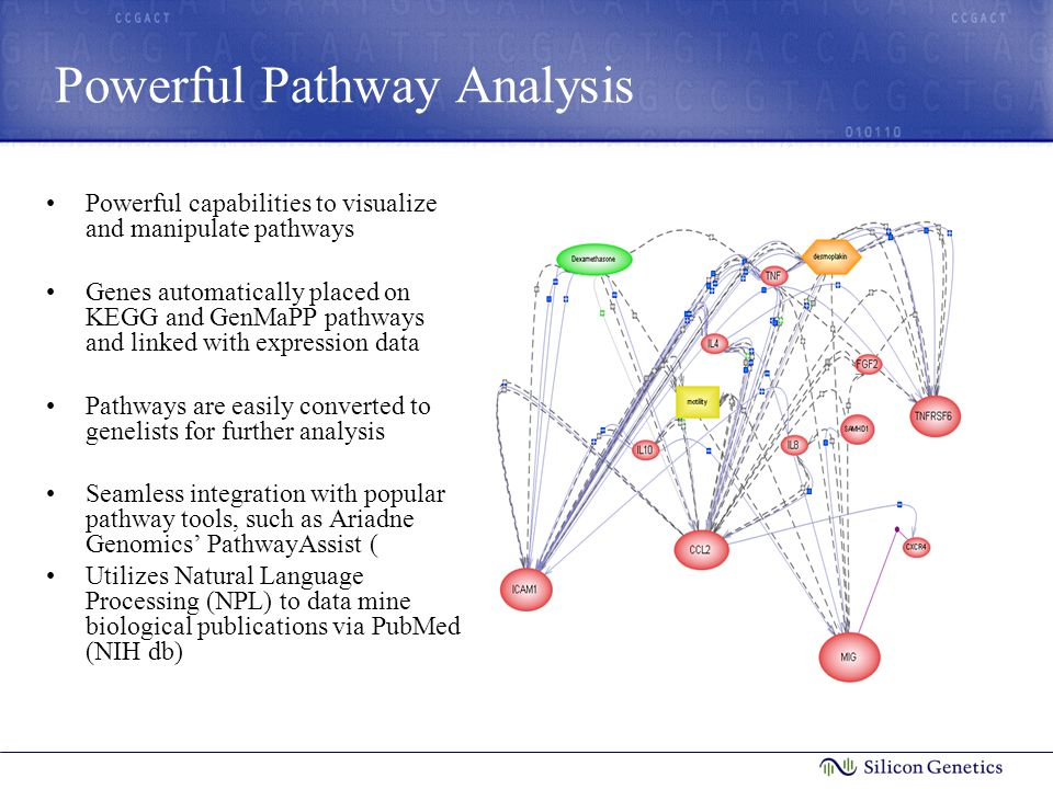 Powerful Pathway Analysis Powerful capabilities to visualize and manipulate pathways Genes automatically placed on KEGG and GenMaPP pathways and linked with expression data Pathways are easily converted to genelists for further analysis Seamless integration with popular pathway tools, such as Ariadne Genomics' PathwayAssist ( Utilizes Natural Language Processing (NPL) to data mine biological publications via PubMed (NIH db)