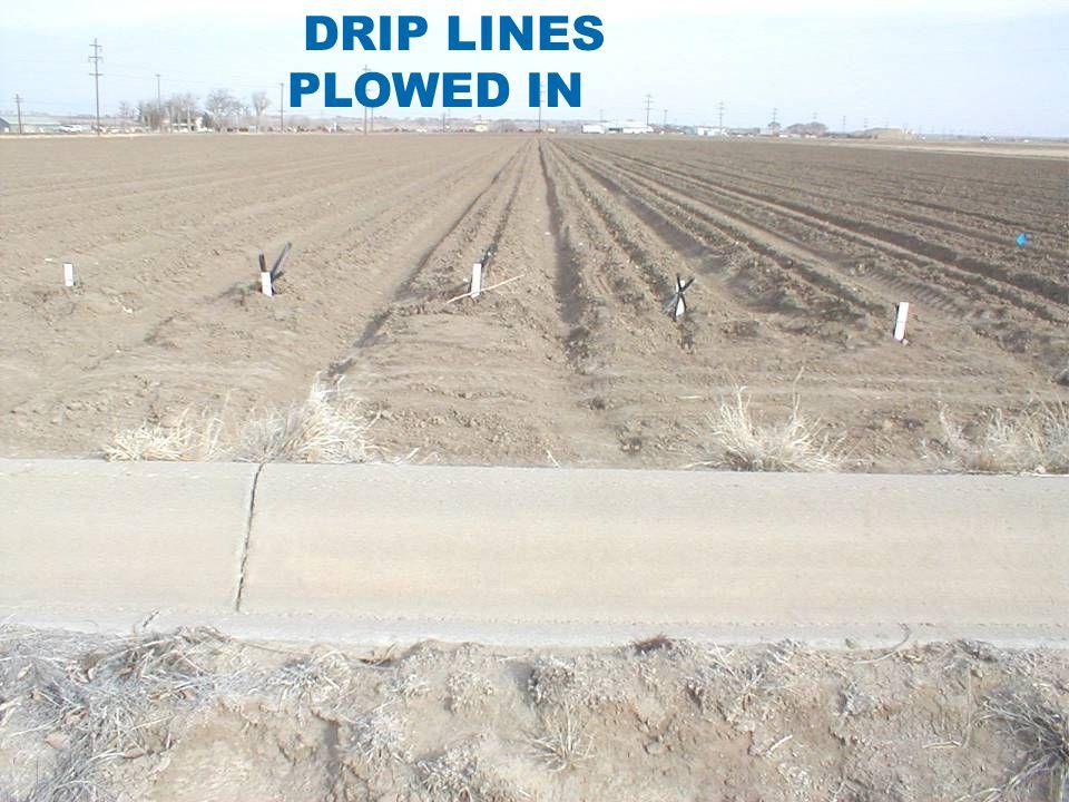 DRIP LINES PLOWED IN