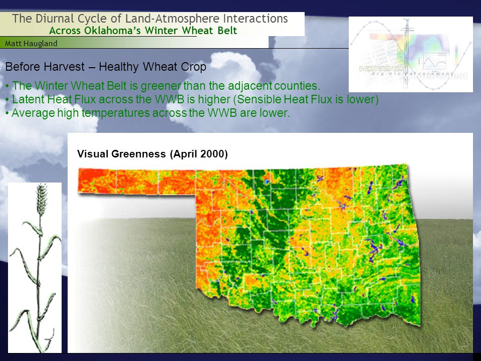 Matt Haugland Across Oklahoma's Winter Wheat Belt The Diurnal Cycle of Land-Atmosphere Interactions Before Harvest – Healthy Wheat Crop The Winter Wheat Belt is greener than the adjacent counties.
