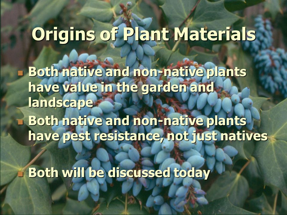 Origins of Plant Materials Both native and non-native plants have value in the garden and landscape Both native and non-native plants have value in the garden and landscape Both native and non-native plants have pest resistance, not just natives Both native and non-native plants have pest resistance, not just natives Both will be discussed today Both will be discussed today